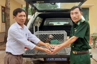Tiếp nhận, cứu hộ 2 cá thể chim Cao Cát